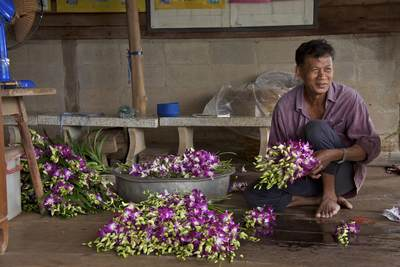 Orchid farmer preparing bunches of orchids (Orchidaceae) for sale and export, at an orchid farm in Klong Mahasawasdi in Nakhon Pathom in Thailand