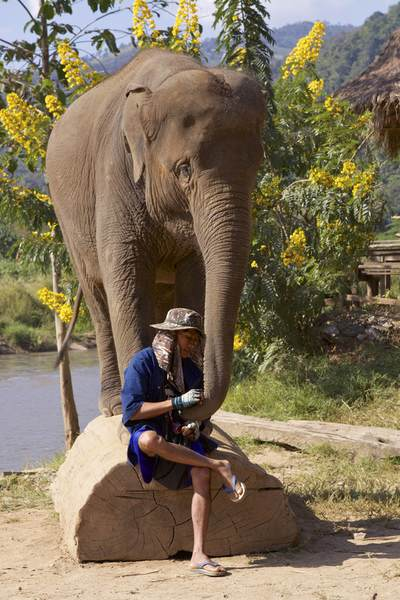 A mahout shares a quiet moment with a rescued Asian elephant (Elephas maximus) at the Elephant Nature Park, the only sanctuary for Asian elephants near Chiang Mai in Thailand