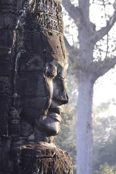 Side view of one of the Bayon's most distinctive features in early morning light wih a tree in the background , a massive stone face within the Angkor Thom complex (Khmer for Great City) built in the late twelfth century in Cambodia