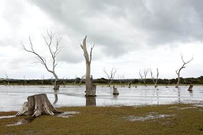 A salt lagoon with dead trees on the North East coast of Kangaroo Island in South Australia