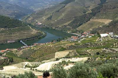 Traced vineyards on the banks of the river Douro in the Douro Valley in Northern Portugal