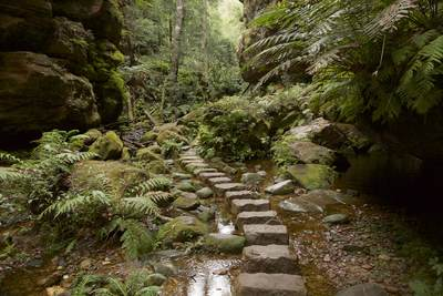 A stepping stone bridge in the verdant lush shaded Grand Canyon track trail in the Blue Mountains from Evans Lookout, a region west of Sydney in Australia's New South Wales, Australia