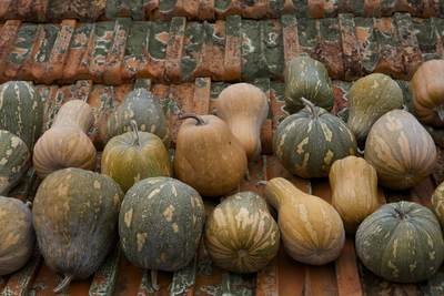 Pumpkins and gourds drying on a roof in Santana, a village in North East Madeira, Portuguese Portugal island, Europe