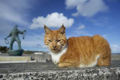 A ginger marmalade stripy pet feline cat rests on a stone concrete wall in Newlyn near Penzance with a sculpture of a fisherman behind on a sunny day in Cornwall United Kingdom Europe