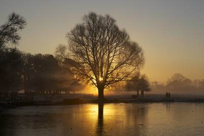 Sunrise dawn in Bushy Park, Middlesex with the sun rising behind the silhouette of a tree in the winter by the frozen Heron Pond with ice, Teddington United Kingdom Europe