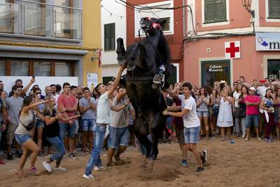 Black stallions with professional riders practice walking on their hind legs to take part in the horse festival 'Festival of St Nicholas' in the little town of Es Mercadal in Menorca, part of the Balearics in Spain Europe