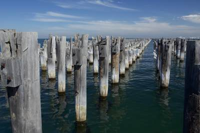 Old wooden turpentine wood pier piles exposed during renovations at Princes Pier in Melbourne, Victoria, Australia