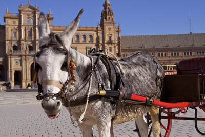 A donkey with a small carriage (trap) waits to give rides to children around the Plaza de España in Seville, Andalucia, Spain Europe