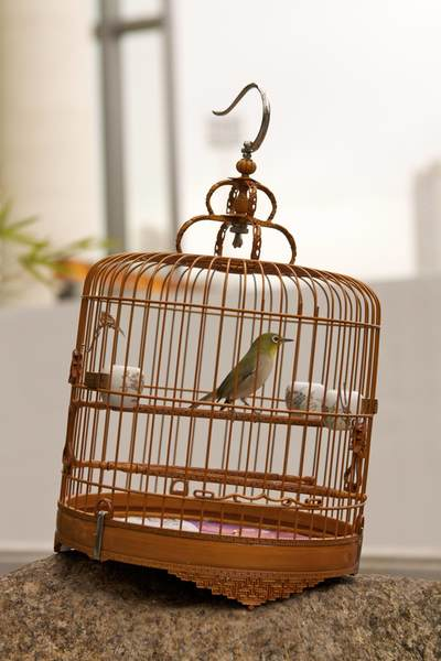 A whicker cage with a green bird, in the Yuen Po Street Garden, a garden created in 1997 for bird owners to display their birds and to buy new ones on Kowloon in Hong Kong