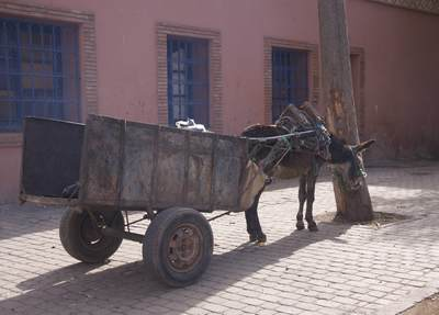 Tired donkey with cart resting under a tree on a cobbled road in the Morthern Medina of Marrakech Marrakesh in Morocco in Africa