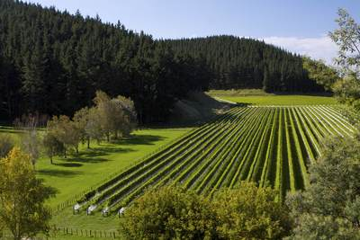 Rows of vines in one of three vineyards of the Mission Estate Winery - Hawke's Bay's oldest winery near Napier on North Island in New Zealand