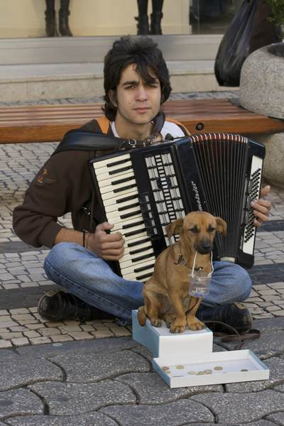Man sat on the pavement in Rua de Santa Caterina playing an accordion for money with dog holding a collecting container with a try of coins beneath in Porto, Northern Portugal, Europe