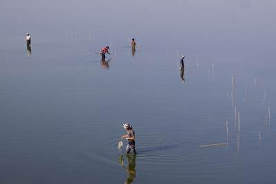 Men stand in the shallow waters of the Taungthaman Lake fishing with bamboo poles, near the town of Amarapura in Myanmar (Burma)