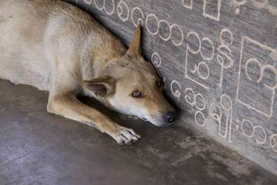 Temple dog rests on a stone bench next to Burmese carved scriptures, in the shade of the staircase leading up Yankin Hill in Mandalay in Myanmar (Burma)