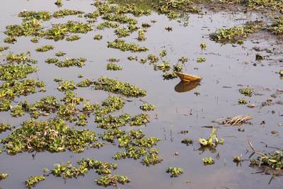 A 'paddy hat' blown into the water with floating hyacinths near, Inle Lake in Myanmar (Burma)